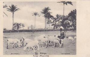 Belgian Congo Mayombe Les moutons