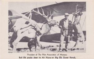 HARLOWTON , Montana , 1930s; Courtland Du Rand Big Elk & Buffalo Ranch