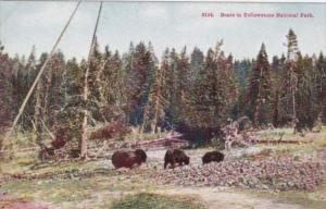 Bears In Yellowstone National Park
