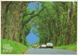 Tree Tunnel, Kauai, unused Postcard
