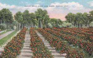 Florida Typical Orange Grove Along A Lake Shore