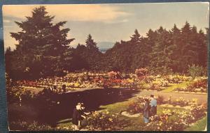 Postcard Used Rose Test Gardens, Portland, OR LB
