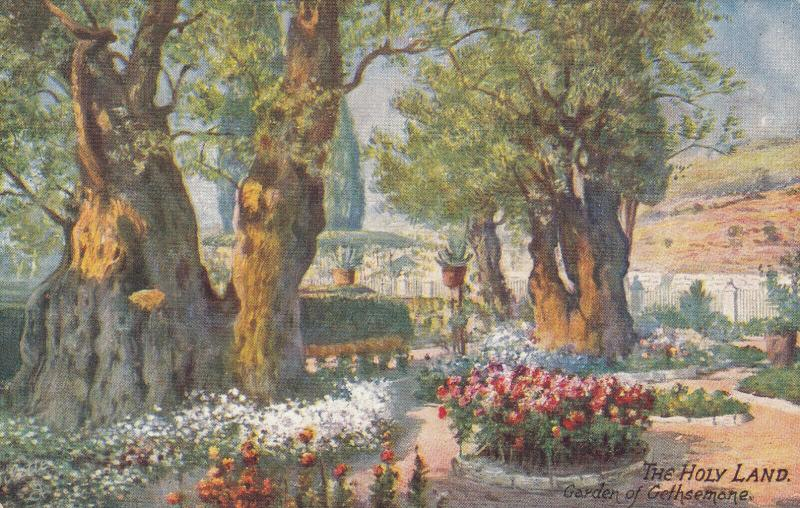 TUCK #7785 ; Holy Land, 00-10s ; Garden of Gethsemane