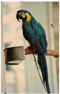 Postcard - Hello! Squawks Henry at National Geographic Society, Washington DC