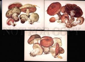 033905 MUSHROOMS Collection of 16 russian colorful cards #2