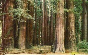 10061 Grove of Redwood, Redwood Highway, California