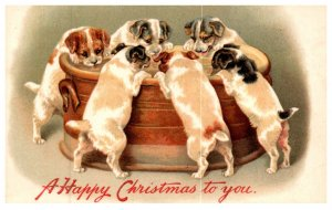 Dogs , Puppies drinking from Tub , Christmas