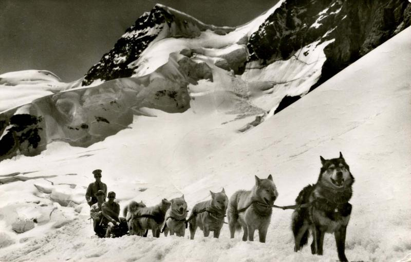 Switzerland - Jungfraujoch. Sled Dog Team.  *RPPC