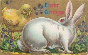 EASTER, 1900-10s; Greetings, Chick giving violet to white rabbit