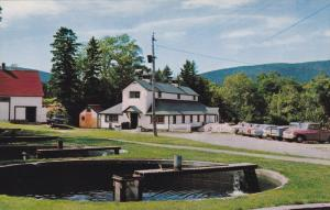 Fish Hatchery, Margaree Valley, CAPE BRETON, Nova Scotia, Canada, 1940-1960s