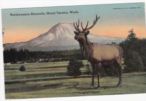 Northwestern Monarchs (Deer), Mount TACOMA, Washington, PU-1912