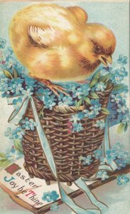 EASTER, 1911; Chick standing on basket of blue flowers, Easter Joy be Thine