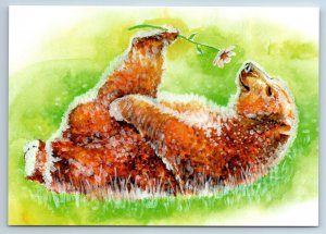 FUNNY BROWN BEAR with Flower on Meadow Comic New Unposted Postcard