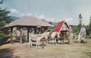 JEFFERSON, New Hampshire, 1940-60s; Animals at Santa's Village, Route 2