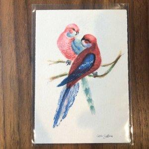 BARRE & DAYEZ Postcard - BIRD - PARROTS - FRANCE - VINTAGE ART
