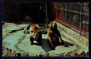 Grizzly Bears,Roeding Park Zoo,Fresno,CA BIN