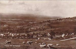 RP: Cheltenham, or Cheltenham Spa,,Gloucestershire, England, 00-10s Sheep on ...