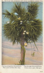 Palm tree entwined with Cereus Flowers , Florida , 1930