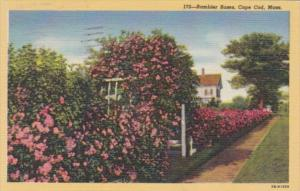 Massachusetts Cape Cod Typical Rambler Roses 1949 Curteich