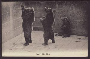 Bears,Bern Zoo,Switzerland Postcard