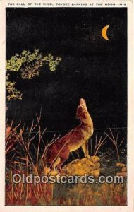 Call of the Wild, Coyote Postcard Post Card unused