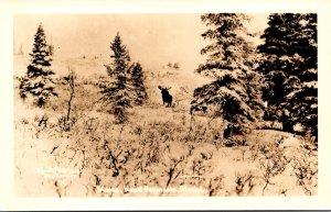 Alaska Kenai Peninsula Winter Scene With Moose Real Photo