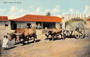 Cuba Ox Team Farmer Carriage Cattle Children Cart Antique Postcard K12926