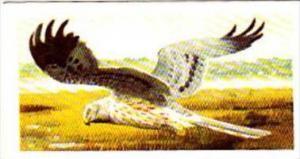 Brooke Bond Tea Trade Card Wild Birds In Britain No 31 Montagu's Harrier