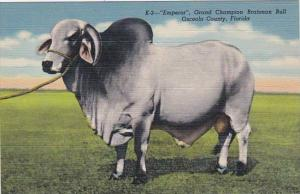 Florida Osceola County Emperor Grand Champion Brahman Bull Heart-...