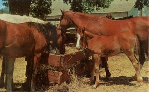 Horses at White Deer Trading Post, Cold Spring, NY