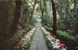 Alabama Mobile Bellingrath Gardens Path Lined With Camellias and Azaleas