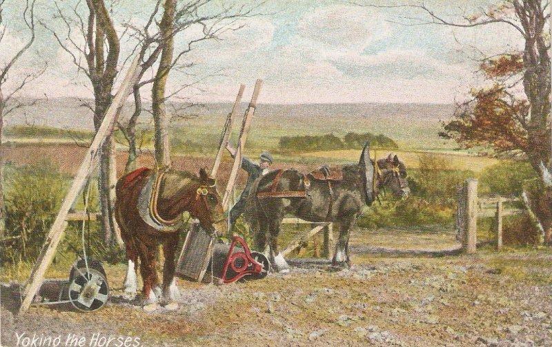 Yoking the horses Nice old vintage English postcard