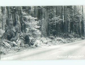 Pre-1950 rppc REDWOOD TREES Around Del Rio & Klamath & Eureka & Redding CA W0463