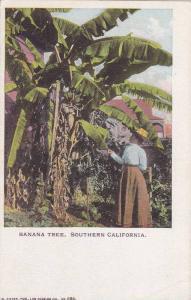 Banana Tree,Southern California, 00-10s