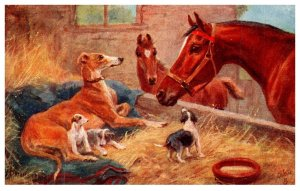Dog , Dogs and Horses