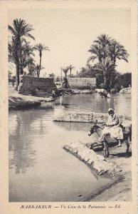 Waterfront View, Donkey, Horses Bathing, Un Coin de la Palmeraie, Marrakesh, ...
