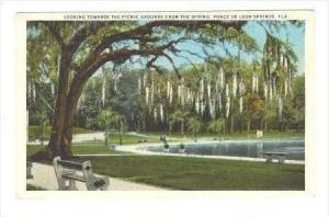 Picnic Grounds from the Spring, Ponce De Leon Springs, Florida, 1910-20s