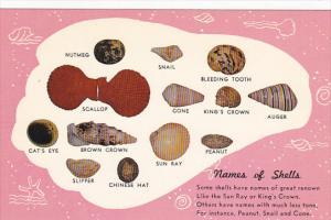Shellfish Names Of Shellfish
