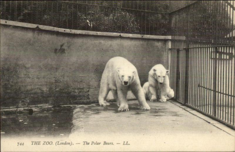 London Zoo - Polar Bears c1910 Postcard