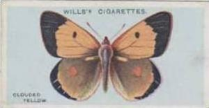 Wills Vintage Cigarette Card British Butterflies No. 49 Clouded Yellow 1927