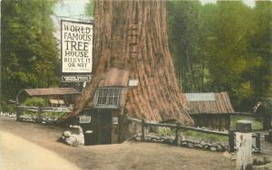 Albertype 1939 PIERCY CALIFORNIA House Lilley Redwood Park hand colored 4167