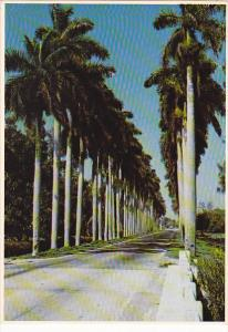 Palm Lined Street Around Lake Okeechobee Florida