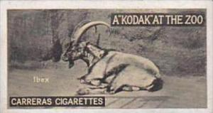 Carreras Cigarette Card Kodak At Zoo 1st Series No 47 Ibex