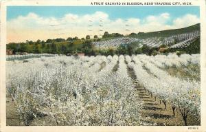 Traverse City Michigan~Fruit Orchard In Blossom, Even on Hill~1920s Postcard