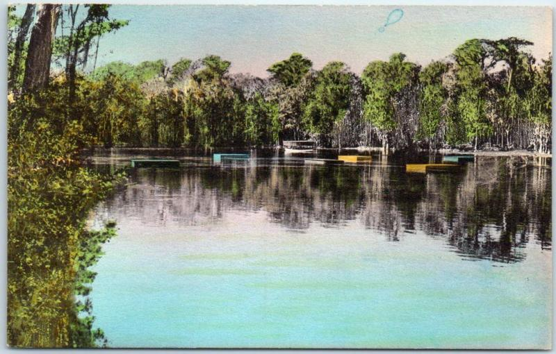 Wakulla Springs, FL Postcard Glass-Bottom Boat & Bathing Floats HAND-COLORED