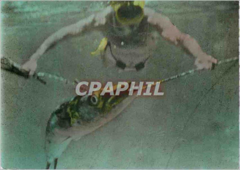 Modern Postcard Catching a barracuda is not safe