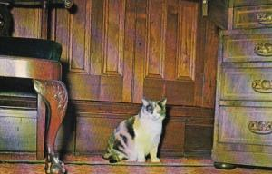 Kentucky Lexington Gypsy The Cat Who LIved At Ashland Home Of Henry Clay