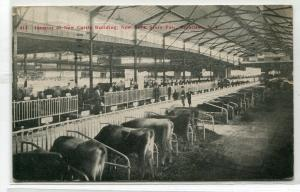 Cattle Building Interior Cows New York State Fair Syracuse New York postcard