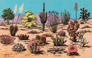 10041 Cacti and Desert Flora of the Great American Southwest