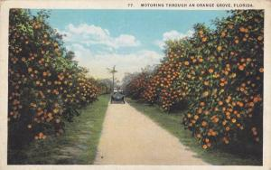 Motoring through an Orange Grove, Florida,00-10s